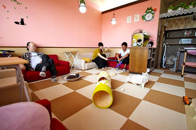 猫茶-店内奥2.jpg