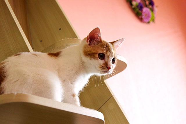 猫茶-猫01-2.jpg