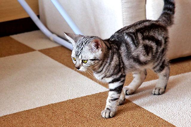 猫茶-猫04-2.jpg