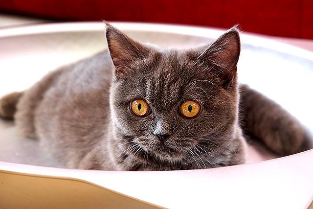 猫茶-猫05-2.jpg
