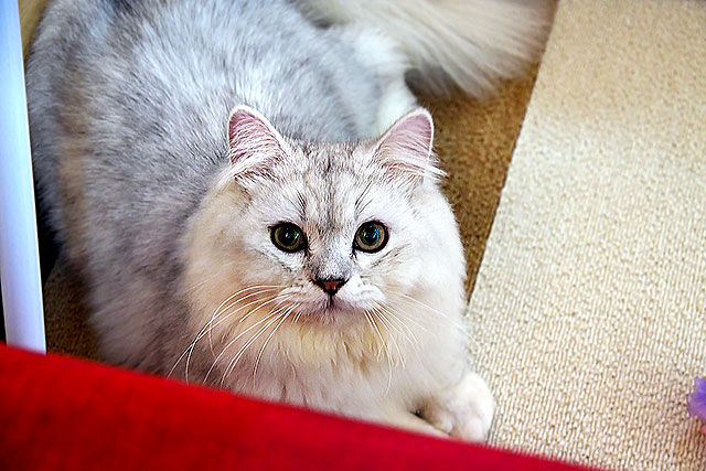 猫茶-猫06-2.jpg