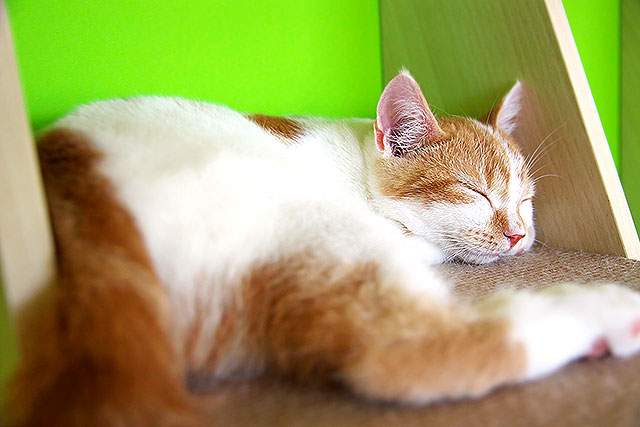 猫茶-猫07-2.jpg
