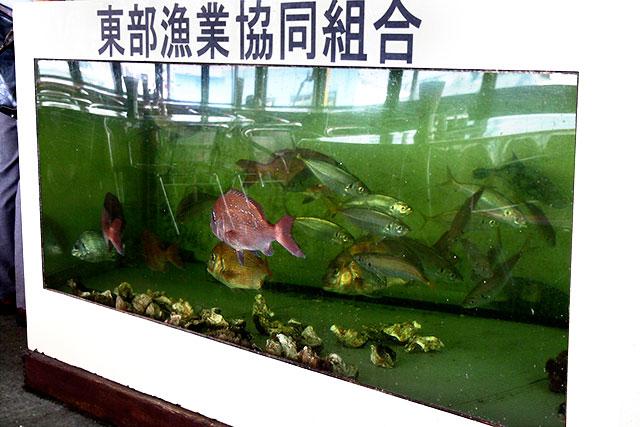 海鮮食堂_水槽2.jpg